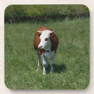 Cow In The Pasture Beverage Coaster