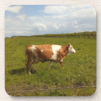 Cow In The Pasture Coaster