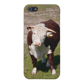 Cow iPhone SE/5/5s Cover