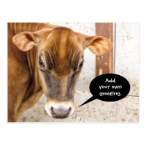 Cow Is Mad Postcard