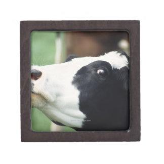 cow jewelry box