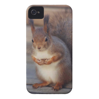 Cow-lick Squirrel Case iPhone 4 Covers