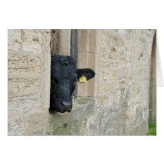Cow looking out of the stone barn card