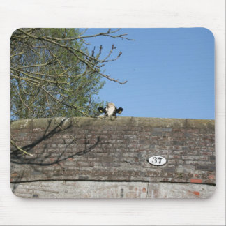 Cow Looking Over Bridge Llangollen Canal Mouse Pad