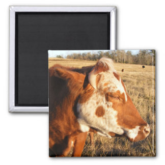 Cow magnet: Fancy 2 Inch Square Magnet