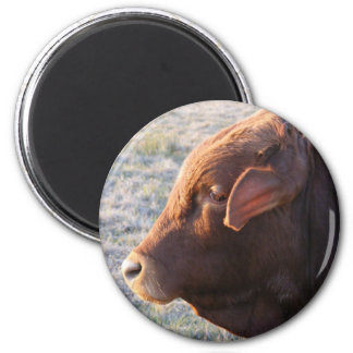 Cow magnet: The Bull 2 Inch Round Magnet