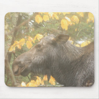 Cow moose in the Maine rain Mouse Pad