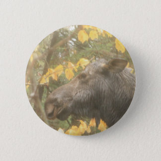 Cow moose in the Maine rain Pinback Button
