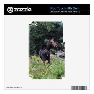 Cow Moose iPod Touch 4G Decal