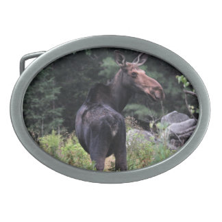 Cow Moose Oval Belt Buckle