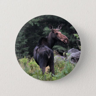 Cow Moose Pinback Button