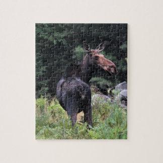 Cow Moose Puzzle
