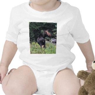 Cow Moose Baby Creeper
