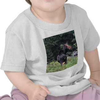 Cow Moose Tshirt