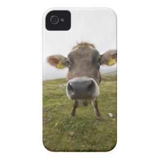 Cow near Tre Cime Di Lavaredo in Misurina, iPhone 4 Case-Mate Case