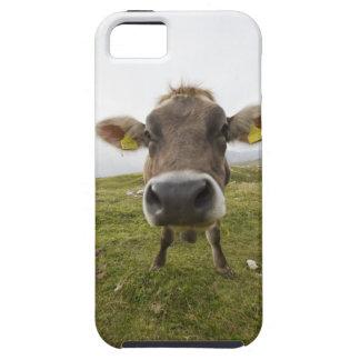 Cow near Tre Cime Di Lavaredo in Misurina, iPhone SE/5/5s Case