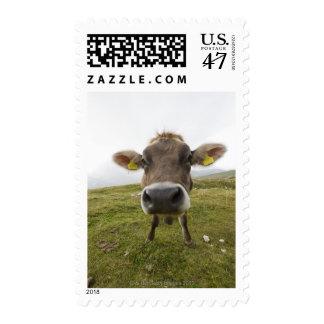 Cow near Tre Cime Di Lavaredo in Misurina, Postage Stamp