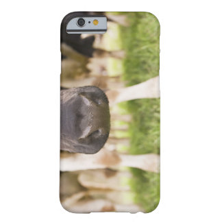 Cow nose barely there iPhone 6 case