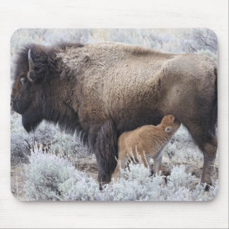 Cow Nursing Bison Calf, Yellowstone 2 Mouse Pad