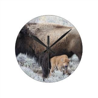 Cow Nursing Bison Calf, Yellowstone 3 Round Clock