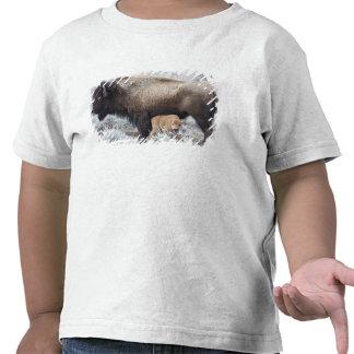 Cow Nursing Bison Calf, Yellowstone 3 Shirts