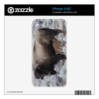 Cow Nursing Bison Calf, Yellowstone Decals For The iPhone 4S