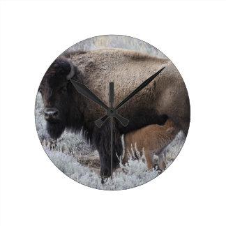 Cow Nursing Bison Calf, Yellowstone Round Clock