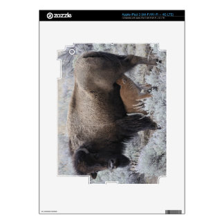 Cow Nursing Bison Calf, Yellowstone Skin For iPad 3