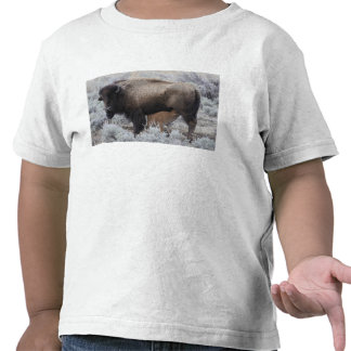 Cow Nursing Bison Calf, Yellowstone T-shirts