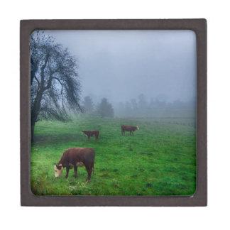 cow on a farm in the mountains keepsake box