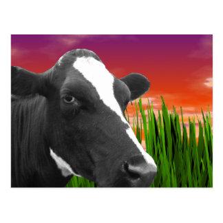 Cow On Grass & Vivid Sunset Sky Postcards