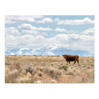 Cow on the Rangeland Postcard