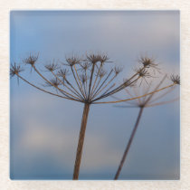 Cow Parsley Glass Coaster