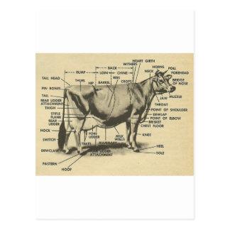 cow parts postcard