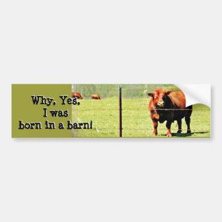 Cow Photo Bumper Sticker