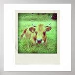 cow polaroid poster
