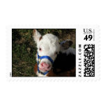 Cow Postage