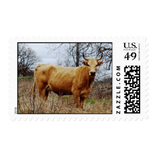 Cow postage stamp