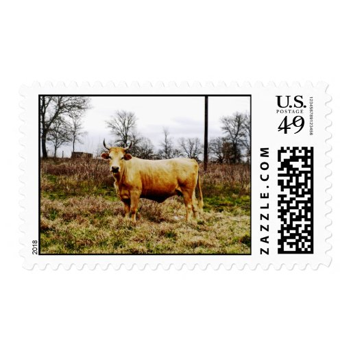Cow Postage Stamps