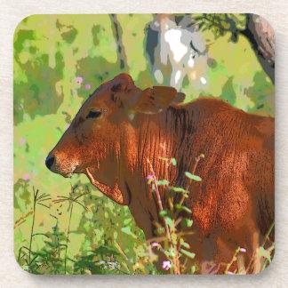 COW QUEENSLAND AUSTRALIA ART COASTER