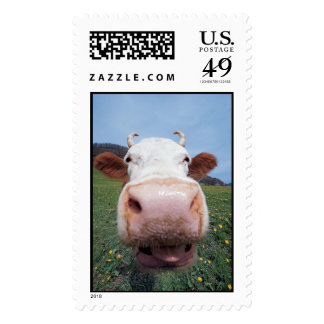 cow stamps