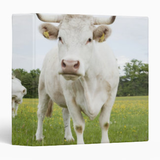 Cow standing in grassy field 3 ring binder