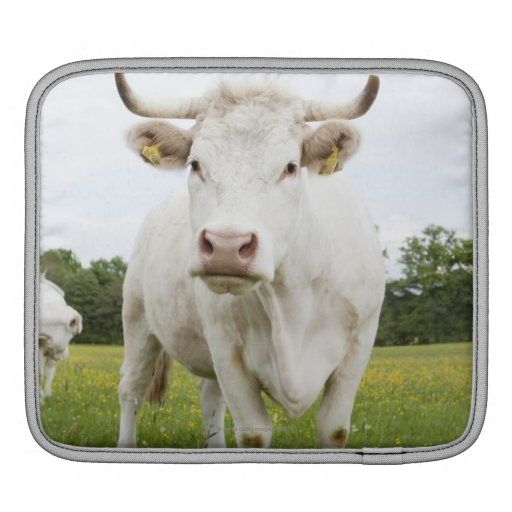 Cow standing in grassy field iPad sleeves