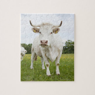 Cow standing in grassy field jigsaw puzzle