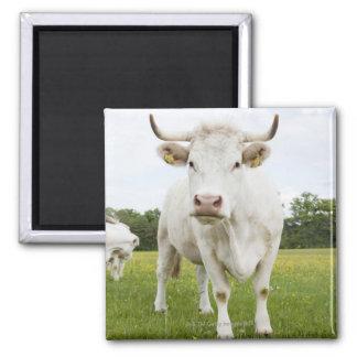 Cow standing in grassy field fridge magnet