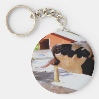 Cow sticking it's tongue out for popcorn keychain