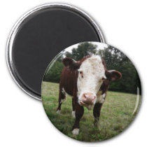 Cow Sticking Out Tongue Magnet