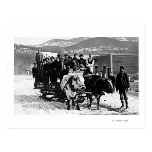 Cow Pulling Wagon : Cow team pulling men in a wagon postcard zazzle