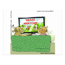 Cow TV Shows Funny Cartoon Postcard
