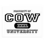 Cow University Post Card